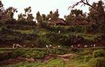 Biblický kraj.   Křesťané vetiopských horách chodí zahaleni do bílých bavlněných látek. Toto místo má velmi příjemnou atmosféru akrajina dokonce voní ...   (Etiopie)