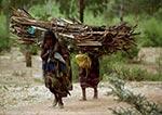 Dřevo.   Etiopské ženy nesou dřevo do své vesnice vhorách. Chvíle odpočinku při dlouhé cestě vysoko do hor si zpříjemňují vychutnáváním plodů kaktusů, které všude kolem rostou. VEtiopii žije přes 55 milionů obyvatel.   (Etiopie)